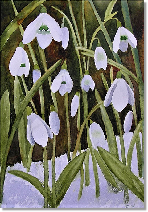 snowdrops-1.png