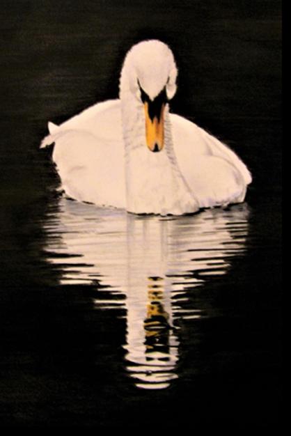 swan-1-shadow.png